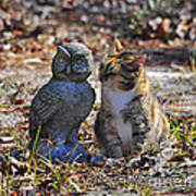 Calico Cat And Obtuse Owl Art Print by Al Powell Photography USA