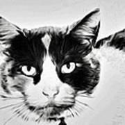 Calico Kitty Art Print