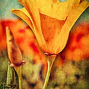 California Poppy Art Print by Pam Vick