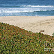 California Beach With Ice Plant Art Print by Carol Groenen