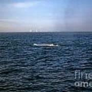 California Blue Whale Art Print
