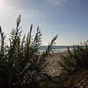 California Carlsbad Beach Hidden View Art Print