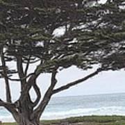 California Coast # 8 Art Print