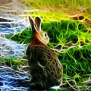 California Hare - 0297 Art Print