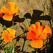California Poppies - Crisp Shadows From The Desert Sun  Art Print