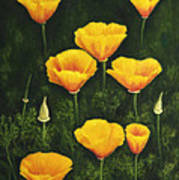 California Poppy Art Print by Veikko Suikkanen