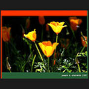 California Poppys 2007 Art Print