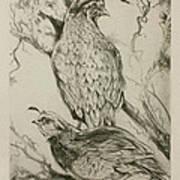 California Quails Lithograph Art Print
