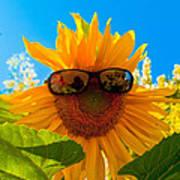 California Sunflower Art Print by Bill Gallagher