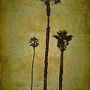 California Trees Art Print