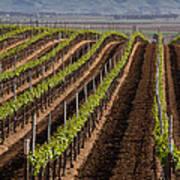 California Vineyard Art Print