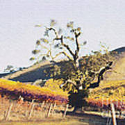 California Vineyard Series Oaks In The Vineyard Art Print
