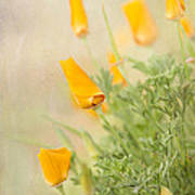 California's Poppy Art Print