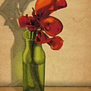 Calla Lilies In Bloom Art Print