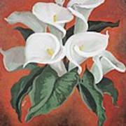 Calla Lilies On A Red Background Art Print