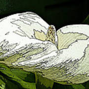 Calla Lily Sketch Art Print