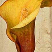 Calla Lily Vintage  Art Print by Heidi Smith