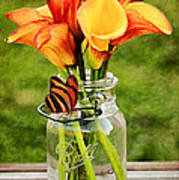 Calla's And The Butterfly Art Print