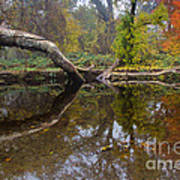 Calm On Big Chico Creek Art Print