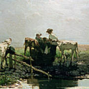 Calves At A Pond, 1863 Art Print