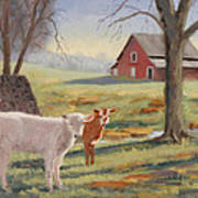 Calves At The Spring House Art Print