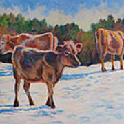 Calves In Snow Art Print