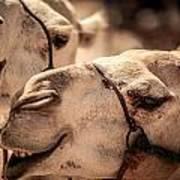 Camel Face Art Print