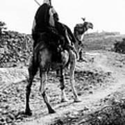 Camel Rider Art Print