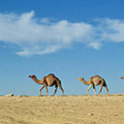 Camel Train Art Print