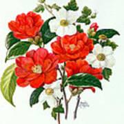 Camellia Adolf Audusson Art Print