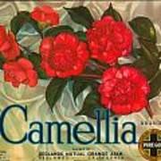 Camellia Crate Label Art Print