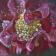 Camellia Rain Art Print