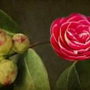 Camellia Art Print by Rebecca Cozart