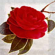 Camellia Spectacular Art Print
