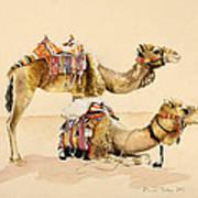 Camels From Petra Art Print