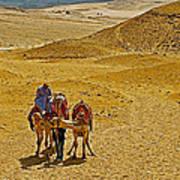Camels Nuzzling On The Giza Plateau-egypt  Art Print