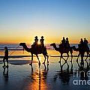 Camels On The Beach Broome Western Australia Art Print by Colin and Linda McKie