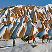 Camels On The Snow Art Print