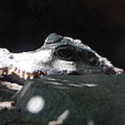 Camo-croc Art Print