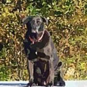 Camouflage Labrador - Black Dog - Retriever Art Print