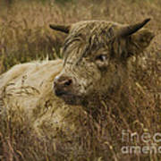 Camouflaged Cow Art Print