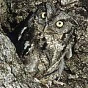 Camouflaged Screech Owl Art Print