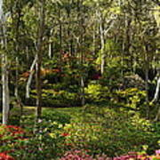 Campbell Rhododendron Gardens 2am 6831-6832 Panorama Art Print
