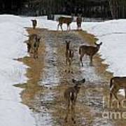 Can Deer Read Art Print