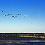 Canada Geese At Northside Park Art Print
