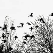 Canada Geese Flight Silhouette Art Print