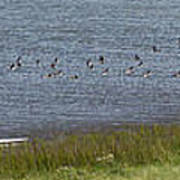 Canada Geese Panorama-signed-8x38 Art Print