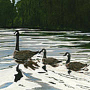 Canadas On Wilson Lake Nc Art Print