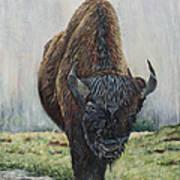 Canadian Bison Art Print