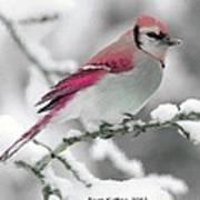 Canadian Cardinal Art Print
